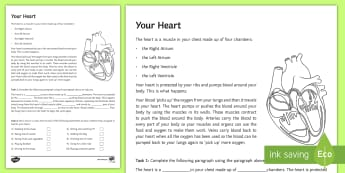 Your Heart Activity Sheet - Science, biology, heart, body, circulation, blood, ks3, sen, salt, worksheet, special educational ne