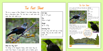 New Zealand Native Birds Tui Fact Sheet - nz, new zealand, Native, birds, animals