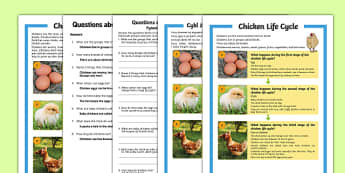 Chicken Life Cycle Differentiated Reading Comprehension Activity English/Polish