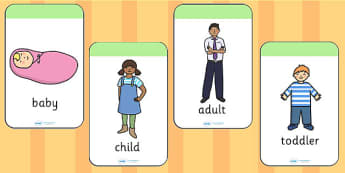 Stages of Growth Flash Cards - growth, grow, flashcards, cards