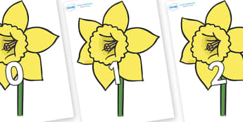 Numbers 0-100 on Daffodils - 0-100, foundation stage numeracy, Number recognition, Number flashcards, counting, number frieze, Display numbers, number posters