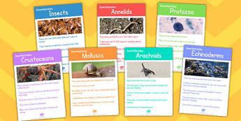 Invertebrates Display Fact Cards - invertebrates, display, facts