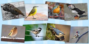 Birds Photo Pack - Birds, Photo, Pack, Wings, Photos, Photographs