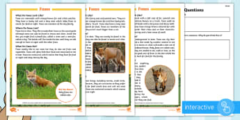 KS1 Foxes Differentiated Comprehension Go Respond Activity Sheets - Children's Books, story, book, Easter, save, saving, Easter Bunny, bunny, bunnies, stories, chick,