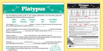 Australian Animals Years 3-6 Platypus Differentiated Cloze Passage Activity Sheet - australia, Australian Curriculum, animals, mammals, platypus, differentiated, cloze, fast finisher, information, reading, worksheet