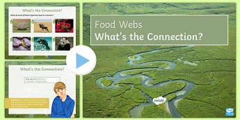 Food Webs What's the Connection?