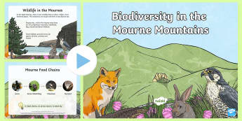 Biodiversity in the Mourne Mountains PowerPoint - Mourne, mountains, biodiversity, wildlife, plants, habitats, animals, Ireland, County Down, Juniper,