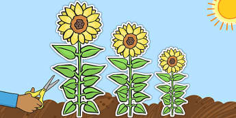 Sunflowers of Varied Sizes cut Outs - sunflower, cut out, varied