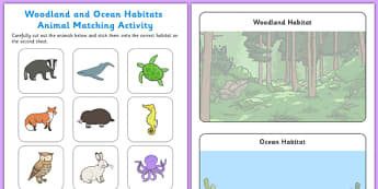 Woodland and Ocean Habitats Animal Sorting Activity Sheet - woodland, ocean, habitats, animal, sorting, sort, worksheet