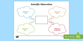 Scientific Observations Activity Sheet - New Zealand Science Capabilities, science, capabilities, primary school, observations, evidence, mak