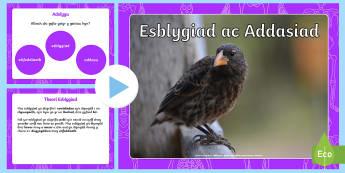 Pŵerbwynt Esblygiad ac Addasiad - WL Social Media Requests in Welsh KS2 (HIGH PRIORITY) esblygiad, addasiad, addasiad, addasiadau, gwy