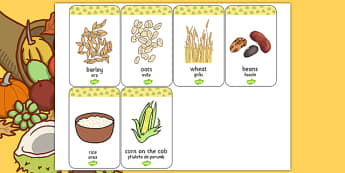 Harvest Grains Flash Cards Romanian Translation - romanian, harvest