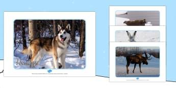 Tiere in der Arktis Fotos Poster DIN A4