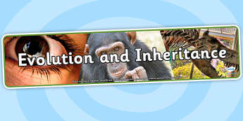 Evolution and Inheritance Photo Display Banner - evolution, inheritance, photo display banner, display banner, banner, photo banner, display header, header