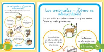 Los animales ¿cómo se alimentan? Póster DIN A4 - animales, dieta, alimentación, clasificación, grupos,Spanish