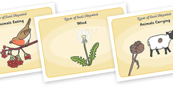 Seed Dispersal Display Posters - seed dispersal display posters, seed, dispersal, seeds, display, banner, sign, poster, disperse, agriculture