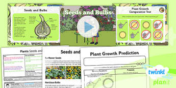 PlanIt - Science Year 2 - Plants Lesson 2: Seeds and Bulbs Lesson Pack