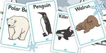 Polar Animals Display Posters - poster, displays, animal, visual