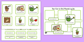Plant Growth Sequencing Activity Gaeilge - plants, flowers, grow, growing