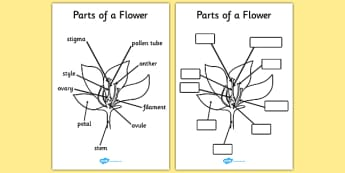 Parts of a Plant and Flower - Plant, Growth, Topic, Foundation stage, Flower, knowledge and understanding of the world, investigation, living things, labelling, labelling plant