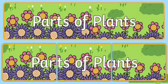 Parts of Plants Display Banner - life cycle, bean, beanstalk, growing, growth, plants, plant life cycle, flowers, banner, abnner, dis