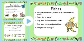 Animal Groups Quiz PowerPoint - animals, animal groups, powerpoint, information powerpoint, quiz, animals quiz, quiz powerpoint, classroom quiz, games