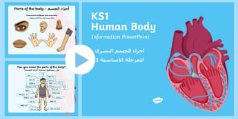 Human Body Information PowerPoint Arabic/English - EAL All About Me,Ourselves, My Body, human, skeleton, organs, brain, lungs, heart, breathing, pp, pp