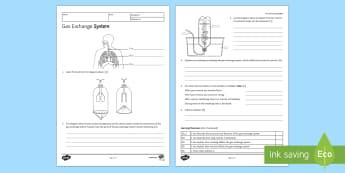 KS3 Gas Exchange Homework Activity Sheet - Homework, gas exchange, breathing, inhaling, inhale, exhaling, exhale, breath, lungs, air, carbon di