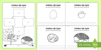 Echidna Life Cycle Activity Sheets - Australian Curriculum Biological sciences, ACSSU030, ACSSU072, lifecycles, echidna, puggle, Australi