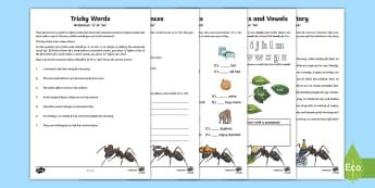 Grammar: Using 'a' or 'an' Activity Booklet - English, grammar,Australia