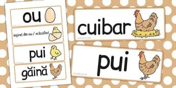 Ciclul de viață la găină - Cartonașe cu imagini și cuvinte