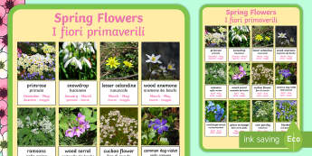 Spring Flowers Display Poster  - Spring, british flowers, seasons, woodlands, display