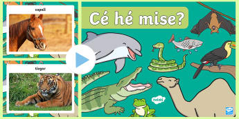 Who Am I? Animal Game PowerPoint Gaeilge - ROI - Irish Language Week Gaeilge Resources - 1st-17th March, game, who am i, animals, gaeilge, ainm