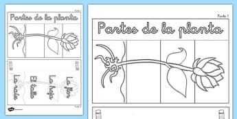 Ayuda visual interactiva Partes de una flor plegable - plants, parts, interactive, visual aid, activity, plantas