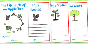 Apple Tree Life Cycle Workbook - life cycle of an apple tree, workbook, life cycle workbook, work book, apple tree work book, apple tree book, apple tree
