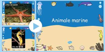 Animalele marine, Prezentare PowerPoint - pesti, stiinte, romana