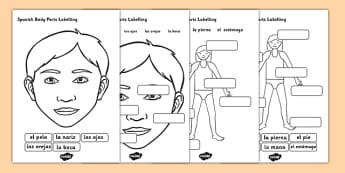 Spanish Body Parts Labelling Worksheet - spanish, body parts
