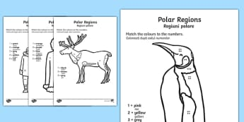 Polar Regions Colour by Number Counting Activity Sheet English/Romanian - Polar Regions Colour by Number Counting Activity Sheet - polar regions, colour by number, colour, nu