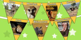 Safari Animal Photo Bunting - safari, jungle, animals, display