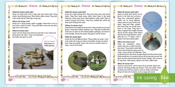 KS1 Geese Differentiated Fact File - Children's Books, story, book, Easter, save, saving, Easter Bunny, bunny, bunnies, stories, chick,