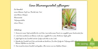 Frühlingsblume pflanzen Arbeitsblatt - DE,  Frühling im Park,German.