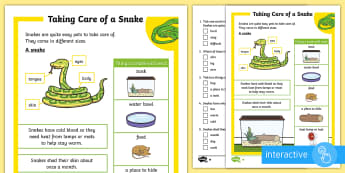 KS1 How to Look After a Snake Differentiated Comprehension Go Respond Activity Sheets - Pets, pet, EYFS, KS1, take, care, look, after, family, member, members, vet, vet surgery, surgery, i