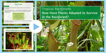 Rainforest Plant Adaptations PowerPoint - rainforest, adaptation, survival, survive, climate, environment, plant, design, live