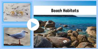 Beach Habitat Photo PowerPoint - australia, Science, Year 1, Habitats, Australian Curriculum, Beach, Living, Living Adventure, Good to Grow, Ready Set Grow, Life on Earth, Environment, Living Things, Animals, Plants, Photos, Photographs, PowerPoint