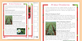 All about Strawberries Differentiated Comprehension Go Respond Activity Sheets - strawberry plants, strawberry farming, strawberry picking, strawberry plant life cycle, strawberry S