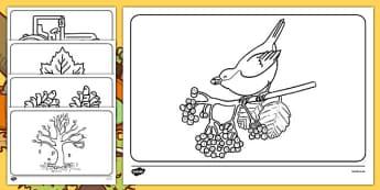 Autumn Colouring Sheets - Autumn, colouring poster, colouring, fine motor skills, activity, harvest, harvest festival, fruit, apple, pear, orange, wheat, bread, grain, leaves, conker