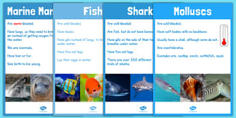 Under the Sea Animal Groups Display Posters Photos - sea, animal