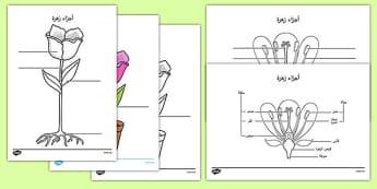 ورقة عمل تسمية أجزاء النبات - أجزاء النبات، وسائل تعليمية، موارد