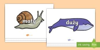 Słowa opisujące wielkość na ślimaku i wielorybie - ślimak, wieloryb, ślimaki, wieloryby, ślimaku, wielorybie, zwierzęta, woda, morskie, morski, ma
