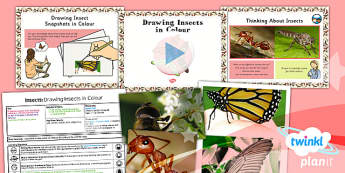 PlanIt - Art LKS2 - Insects Unit Lesson 2:  Drawing Insects in Colour Lesson Pack